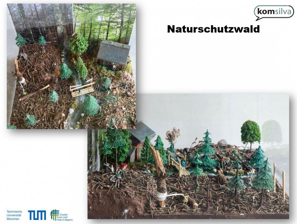 Waldschaufenster TUM Naturschutzwald1